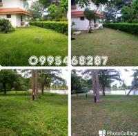 บริการตัดหญ้าตัดแต่งไม้ประดับ 0995468287 0964527231