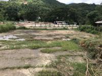 ขายที่ดิน พื้นที่สวย จ.ชลบุรี 100 ตารางวา