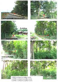 ที่ดินเปล่าหลุดจำนอง ธ.ธนาคารกรุงไทย น่าน กิ่งอำเภอภูเพียง ตำบลฝายแก้ว