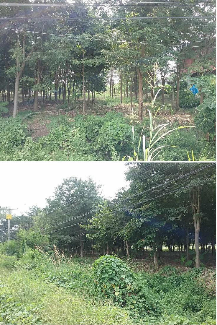 ที่ดินเปล่าหลุดจำนอง ธ.ธนาคารกรุงไทย พิษณุโลก อำเภอบางระกำ ตำบลวังอิทก