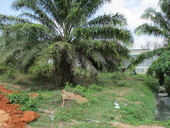 ที่ดินเปล่าหลุดจำนอง ธ.ธนาคารทหารไทย ตรัง ห้วยยอด ห้วยยอด