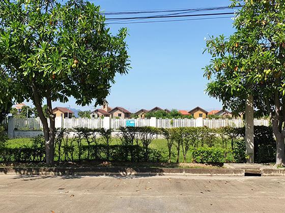 ที่ดินเปล่าหลุดจำนอง ธ.ธนาคารทหารไทย เพชรบุรี ชะอำ ชะอำ