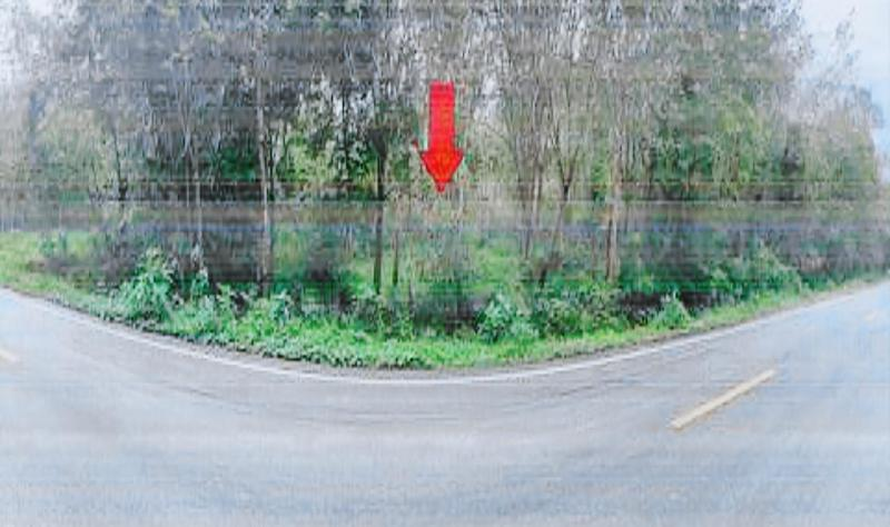 สวนเกษตรหลุดจำนอง ธ.ธนาคารกสิกรไทย ปัตตานี แม่ลาน แม่ลาน