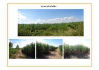 ที่ดินเปล่าแปลงใหญ่หลุดจำนอง ธ.ธนาคารธนชาต เพชรบุรี ชะอำ ไร่ใหม่พัฒนา